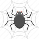 halloween celebration, halloween decoration, haunted concept, spider in web, spider web icon
