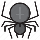 bug, halloween, insect, spider, web