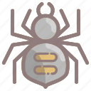 bug, creepy, halloween, insect, scary, spider, spooky