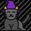 kitten, horror, cat, animal, halloween