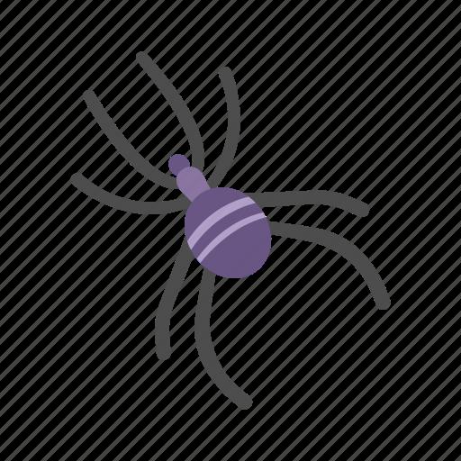 Arachnid, creepy, halloween, spider icon - Download on Iconfinder