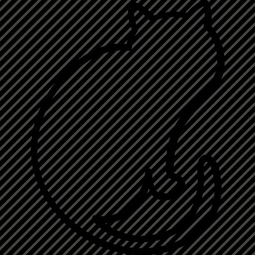 bad luck, bad omen, black cat, cat, evil, feline icon