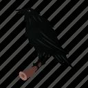 crow, halloween, bird, raven