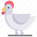 chicken, easter day, egg, happy easter, hen, holidays, spring season icon
