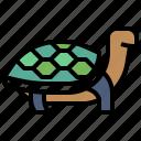 animal, animals, chipmunk, kingdom, turtle, wild, zoo