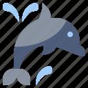 animal, beach, dolphin, dolphins, sea, summer, water