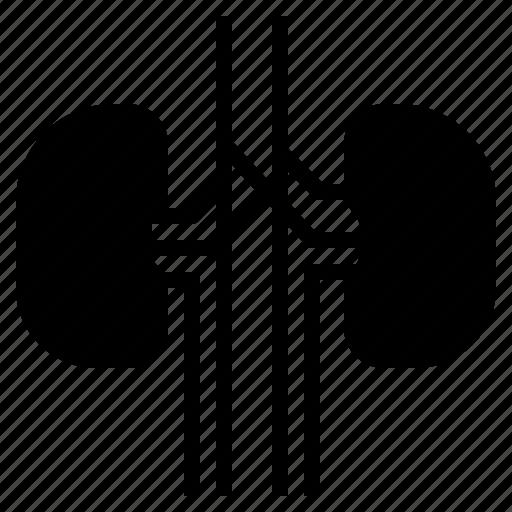 Health, human, kidney, medical, organ icon - Download on Iconfinder