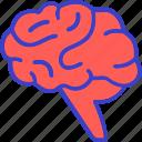 brain, mind, health care, organ