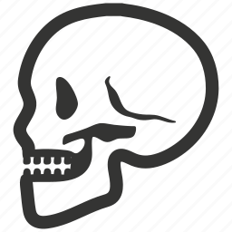 bone, dead, head, human, osteology, skeleton, skull, teeth icon