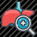 liver, hepatitis, anatomy, organ, checkup