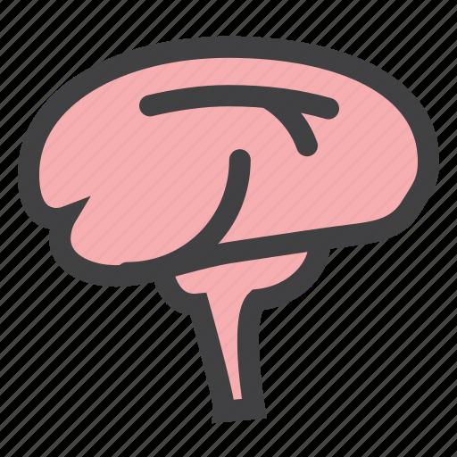 brain, head, medicine, think icon
