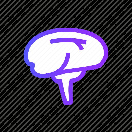 brain, human, man, people, user icon