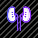 kidneys, healthcare, medical, medicine icon