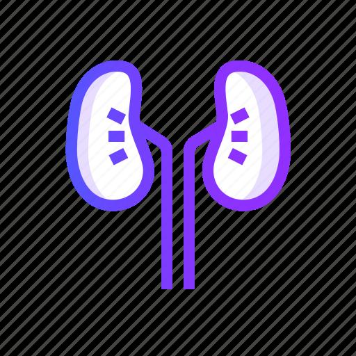healthcare, kidneys, medical, medicine icon