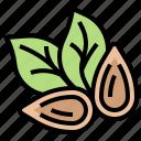 almond, clean, food, healthy, vegan