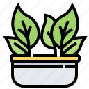 chinese, kale, leaf, vegan, vegetable icon