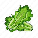 food, greens, healthy, lettuce, vegetable icon