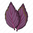 basil, eco, food, leaf, plant, seasoning, spice icon