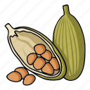 cardamom, cooking, eco, food, plant, seasoning, spice icon