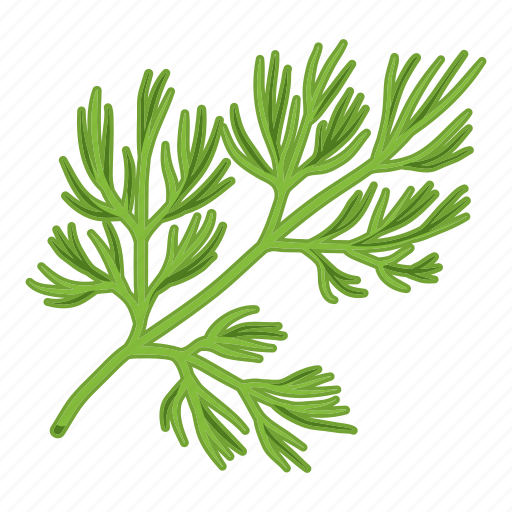 dill, eco, food, grass, leaf, plant, spice icon