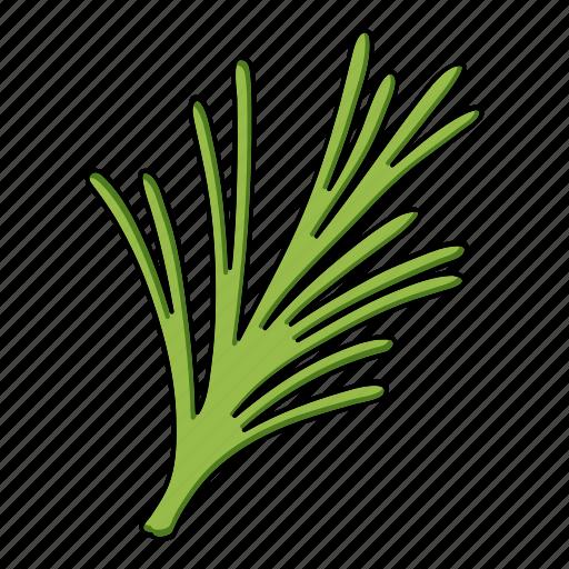 eco, food, leaf, plant, rosemary, seasoning, spice icon