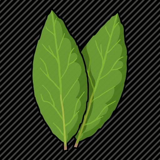 eco, food, laurel, leaf, plant, seasoning, spice icon