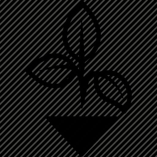 basil, garden, greenery, herbs, plant icon