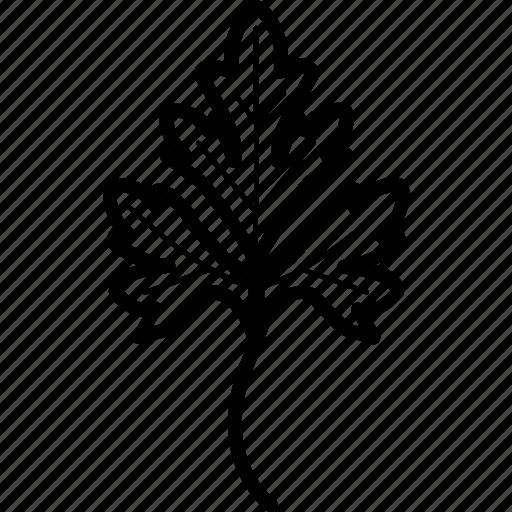 garden, greenery, herbs, parsley, plant icon