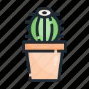 cactus, hobby, nature, plant