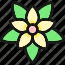 christmas, flower