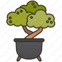 bonsai, decoration, garden, plant, pot icon