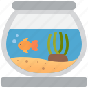 aquatic, bowl, decoration, fish, pet