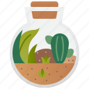 decoration, natural, plant, pot, terrarium