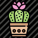 cactus, decorate, desert, flower, plant