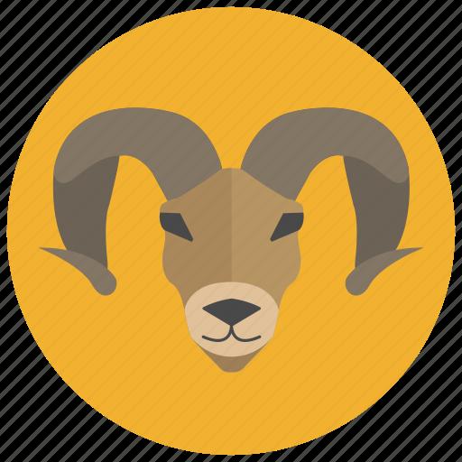 animal, aries, horoscope, ram, sheep, sign, zodiacs icon
