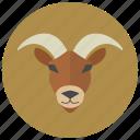 zodiacs, horoscope, capricorn, sign, zodiac, goat