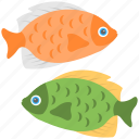 astrological symbol, colorful fish, pisces, two fish, zodiac sign icon