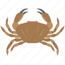 animal, astrological symbol, cancer, crab, zodiac sign icon