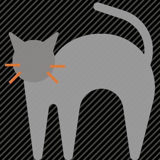 animal, cat, halloween, horror, pet icon