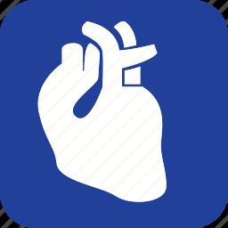 anatomy, body, health, heart, human, organ, part icon