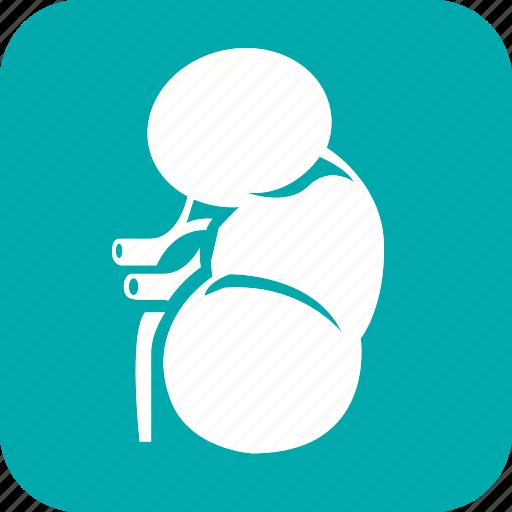 anatomy, body, health, human, liver, organ, part icon