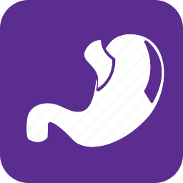 anatomy, body, health, human, organ, part, stomach icon