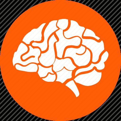 anatomy, body, brain, head, human, organ, part icon