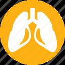human, lungs, anatomy, body, organ