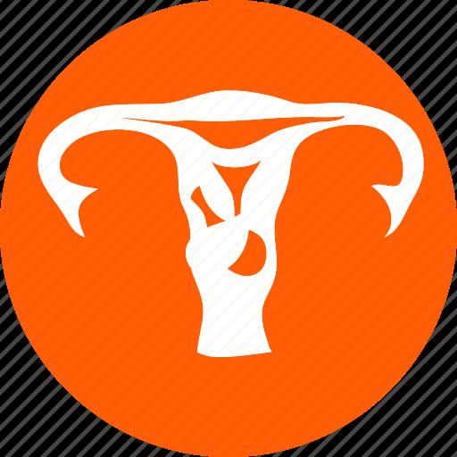 female, fetus, human, human fetus, uterious, uterus, woman icon