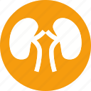 anatomy, body, human, kidney, organ, part, renal icon