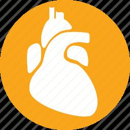 anatomy, body, health, healthcare, heart, human, organ icon