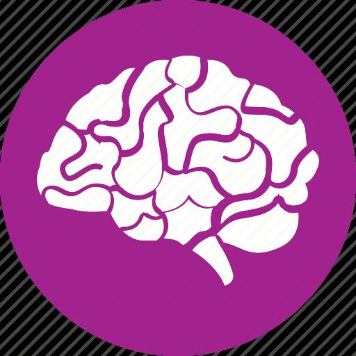 anatomy, body, brain, head, health, healthcare, human icon