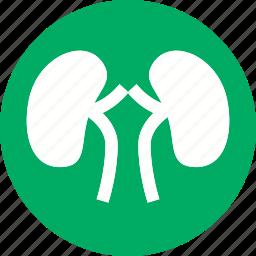 anatomy, body, human, kidney, medical, organ, renal icon
