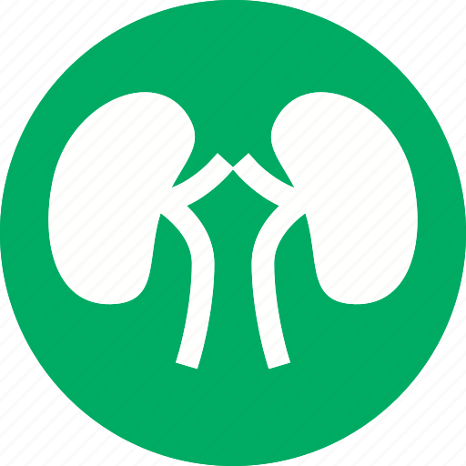 anatomy, body, human, kidney, medical, organ, renal icon